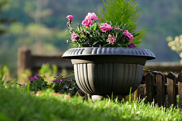 Soil Moist helps container plants.