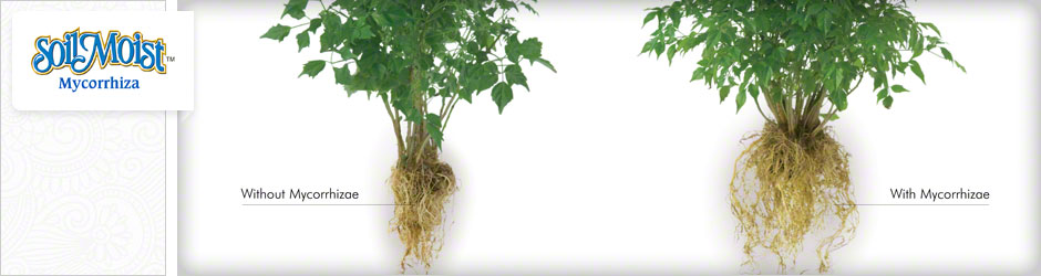 plant roots with mycorrhizae