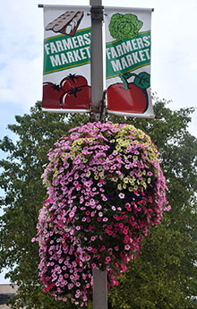 photo of a hanging flower basket with Soil Moist Mats