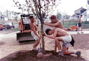 image of a tree being planted